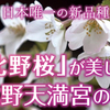 北野天満宮に咲く日本唯一の品種である遅咲き桜の「北野桜」とは
