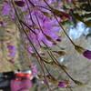 和宏さんの花巡礼「皿ヶ峰」 山笑う時