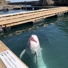 太地町立クジラの博物館:鯨類天国。リピ確定!