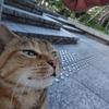 8月前半の #ねこ #cat #猫 その1