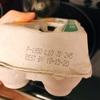 【新鮮な卵の選び方】卵のパックに隠された暗号とは?