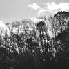 カワヅザクラが咲いてた!2020年2月16日までに撮影したデジカメ写真。RICOH「Caplio GX」多めです