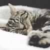 【食事編】失敗しないダイエット法で睡眠の質をあげる