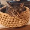 浅草の猫カフェ「きゃらふ」に行ってきました。かなりおすすめです!