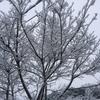 二度目の雪、立春の日差しに融ける雪