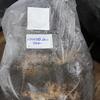 クワガタ産卵木~バクテリア材購入