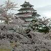 【福島】桜吹雪の会津若松