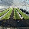 住化農業資材ミストエース設置