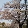 知っていますか?日本のことを!国花・国鳥・国樹・国魚・国蝶・国石・国菌は?