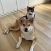 犬・猫のおやつは全部「オーシーファーム」で揃えることにした