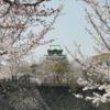 【大阪観光】大阪城公園で、大阪城と桜のコラボを楽しむ!