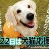 11月22日は犬猫応援の日