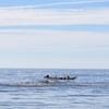 北海道礼文島観光案内:夏の礼文島を代表する有名な海産物 -うに、のな-