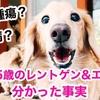 愛犬15歳のレントゲンとエコー検査で意外な結果
