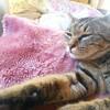 【猫の感触】さわり心地は十匹十色。
