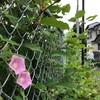 九州北部豪雨―苗の命をつなぐ