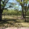 今回は霊園隣りの公園でお昼