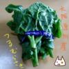 夏が旬!ツルムラサキを料理して食べる【熟女の料理修行】