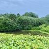 馬場堤溜池(山梨県韮崎)