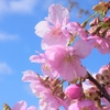 今年も『春まちの丘』に春がきました(^_^)/