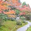 即宗院の紅葉。月輪殿跡の庭園で見頃。