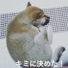 ツンデレな柴犬 キミに決めた!! 出会い編