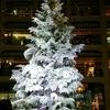 都会のクリスマスを見てきたよ!