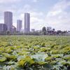 上野で写ルンです