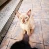 プロンポン周辺のタイ猫は可愛いけど、プラカノン周辺のタイ猫はブサイク!