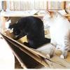 コロナワクチンと30歳の猫とBack to the Futureな猫