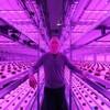 寒冷地アラスカにて初の商業ベース・完全人工光型植物工場が本格生産