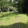 里山の生物を守る方法 - 雑木林の萌芽更新を分かりやすく解説