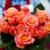 #266 誕生花のブーケアイデア
