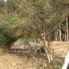 柚子の木の剪定