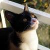 今日の黒猫モモ&白黒猫ナナの動画ー595