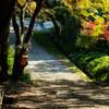初秋の伽耶院 #秋の小道