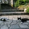 尾道と鞆の浦で撮ってきた猫の写真を貼っていくよ