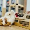 新しいiPhone12 Pro Maxで愛猫を撮影してみた。