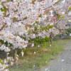 「桜の咲く頃にはいつも思いだす…」episode-6