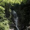 三坂山のミヤマヨメナ
