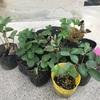 夏野菜を収穫し終えて、秋野菜の種を植えました。