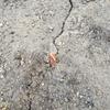 チューリップ発芽とカブトムシ幼虫の脱皮。
