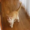自由猫ダイちゃんをめぐるネコ模様