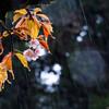 雨ン中の桜 03/26