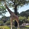 高知旅行記④ 人も動物もゆったり のいち動物園へ