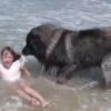 「波にさらわれちゃうよ!」危険な海から絶対に少女を助けたいワンコの動画が話題に