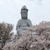 高崎白衣大観音(慈眼院)|春は桜の名所!駐車場、混雑状況など:群馬県高崎市