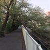 神田川ランニング〜まだカモの親子はいませんでした〜