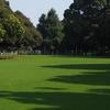 例の山下公園のチューリップ、球根ミックス方式とのこと