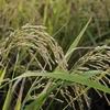 玄米生活を始めて